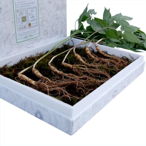 7년근산양산삼(실속형30뿌리)