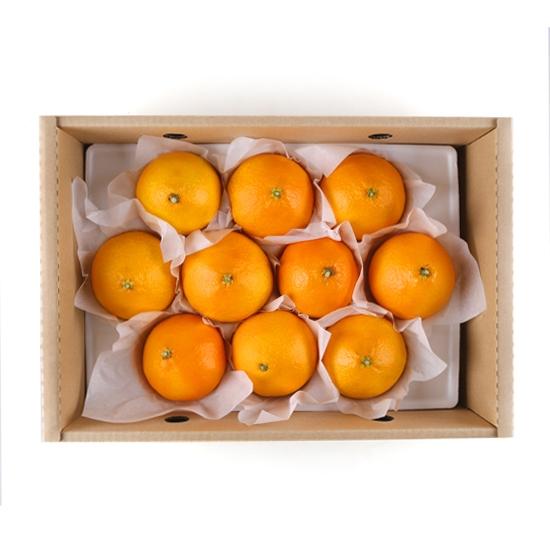 [산지직송]착한농부황금향(2.5kg)
