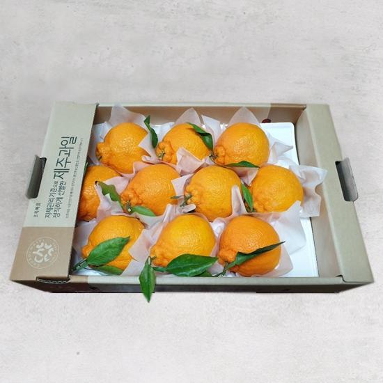 착한농부한라봉(박스/1.8kg)