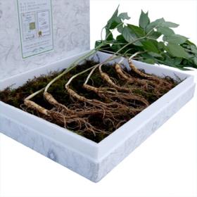 7년근산양산삼(실속형10뿌리)