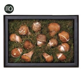 무농약참송이버섯세트