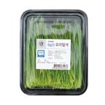 무농약우리밀싹 (150g)