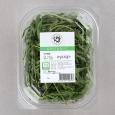 유기농와일드루꼴라 (50g)