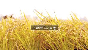 유기농 쌀 생산지 - 충청남도 홍성 관련 이미지